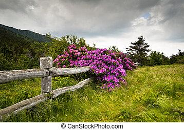 Roan Mountain State Park Carvers, Rhododendron-Blume, blüht die Natur draußen mit Holzzaun