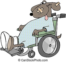 rollstuhl, hund, krank