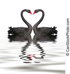 romanze, schwan, schwarz