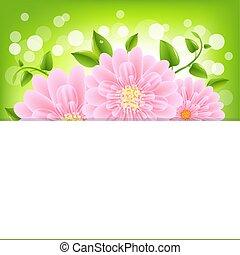 rosa, bokeh, gerber, papier