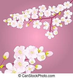Rosa Kirschblüte auf der Ast mit Knospen oder Schießen. Leererer Kopierraum mit Blumengrenz. Vector Illustration.