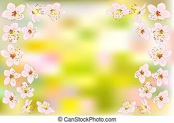 rosa, kirschblüten, hintergrund, blumen, hintergrund., grün, sakura, oder, verwischt