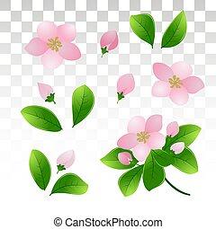 rosa, kirschen, leaves.isolated, blühen, apple., grün, zweige, .eps10., fruehjahr, vektor, durchsichtig, hintergrund., abbildung, junger, blumen, oder