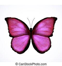 rosa, papillon, hell, vektor, isolated.