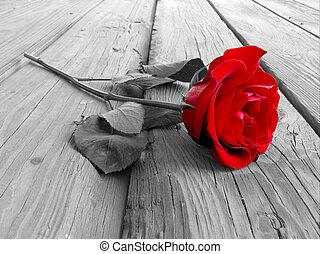 rose, holz, bw