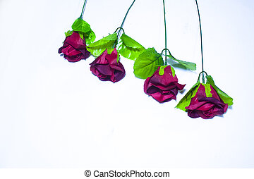 rose, valentine, hintergrund, photoshoot, tag, rotes