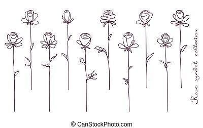 Rosen. Sammlung isolierter Rosenblütenskizze auf weißem Hintergrund