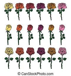 rosen, weißes, satz