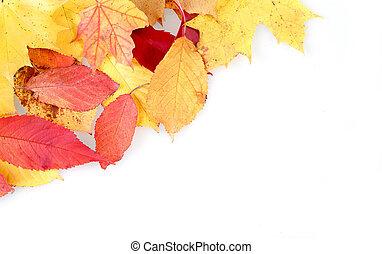 Rot und gelbe Herbstblätter