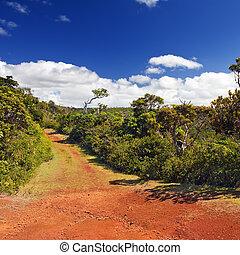 """Rote Erde, Park """"Black River Gorge"""". Mauritius"""