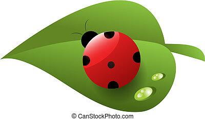 Roter Marienkäfer mit Tau