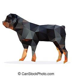 Rottweiler, Vektor