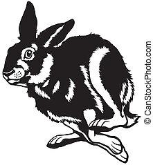 Running european hare.