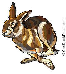 Running Hare.