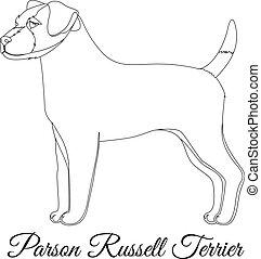 russel, terrier, parson, grobdarstellung