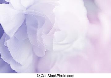Süße Farbe Nelke im weichen Stil für den Hintergrund.