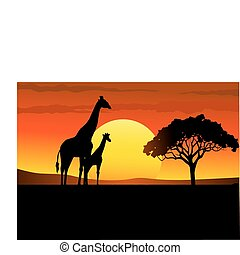 Safari afrika Sonnenuntergang