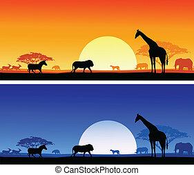 Safari Hintergrund