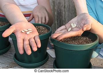 Samen in der Hand