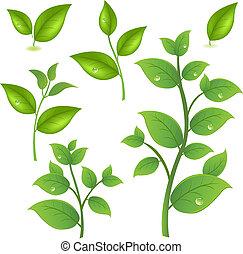 Sammeln von grünen Zweigen