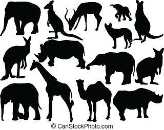 Sammeln von wilden Tieren