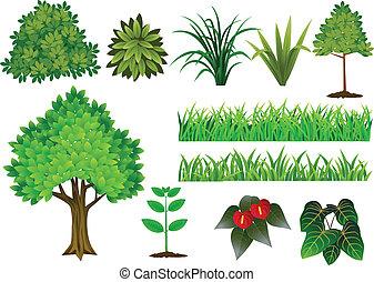 sammlung, baum, pflanze