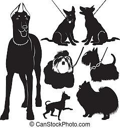 sammlung, hunden