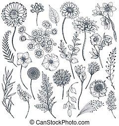 Sammlung von Hand gezeichneten Blumen und Pflanzen