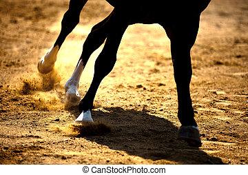 sand, galoppieren, pferd