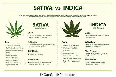 Sativa vs indica horizontal infographic.