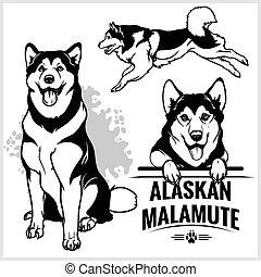 satz, alaskisch, -, hund, abbildung, freigestellt, malamute, vektor, hintergrund, weißes