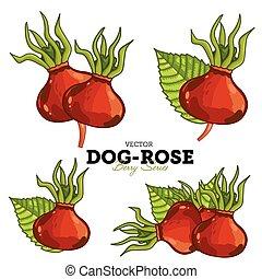 satz, dog-rose, vector.