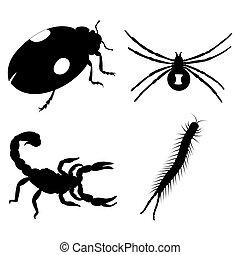 satz, hintergrund., insekten, freigestellt, weißes