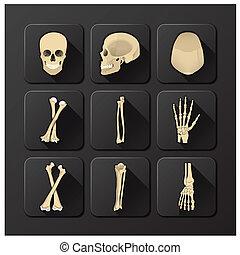 satz, totenschädel, medizinische gesundheit, knochen, ikone