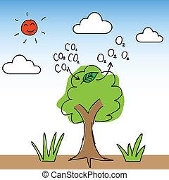 Sauerstoffbaum.
