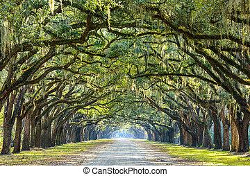 Savannah, Georgie, USA Eichenbaum Straße in historischer Wurmsloe Plantage.