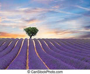 Schöne Landschaft mit blühenden Lavendelfeldern