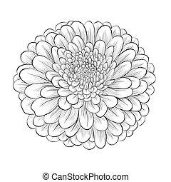 Schöne monochrome schwarze und weiße Blume isoliert auf weißem Hintergrund