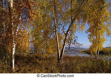 Schöne Naturlandschaft im Herbst.