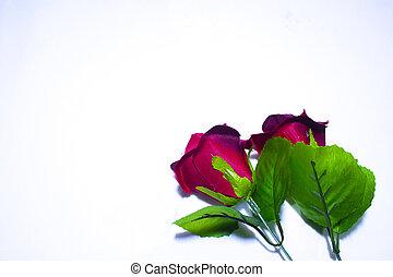 schöne , rose, photoshoot, tag, valentine