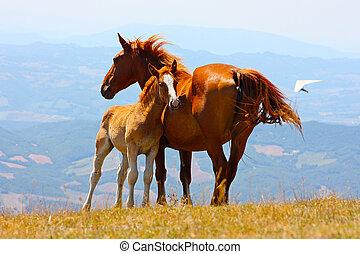 Schöne rote Pferde in den Bergen