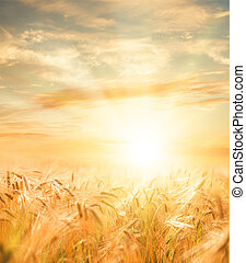 Schönes Weizenfeld.