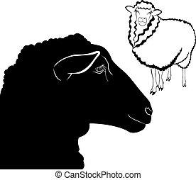 Schafe.