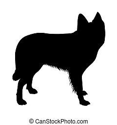schafe, silhouette, hund, niederländisch