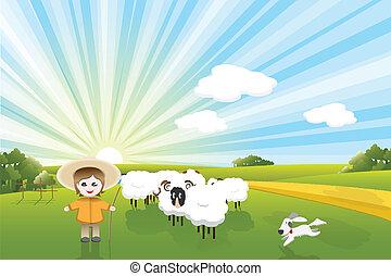 Schafe und Hund