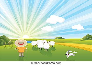 Schafe und Hund.