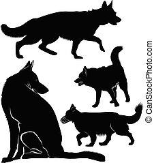 schafhirte, satz, deutsch, hund, silhouetten, hunden