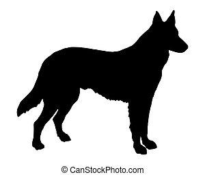 schafhirte, silhouette, hund, schwarz