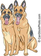 schafhirte, skizze, farbe, rasse, zwei, hund, deutsch, vektor