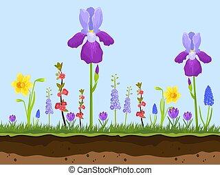 schichten, sommer, kamille, illustration., fruehjahr, artoon, lavendel, blumen, blaues, feld, flowers., vektor, grüner hintergrund, erde, gras, iris., rosa